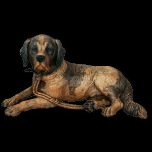 Rare chien de Brienz